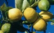 Le citron c'est trop !